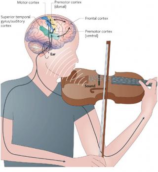 MusicalFeedback